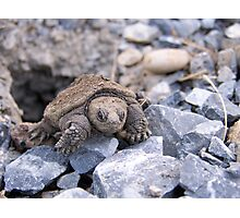 Emerging Snapping Turtle Photographic Print