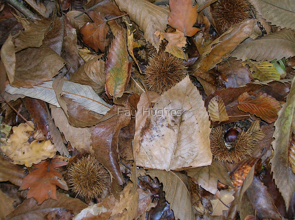 Autumn leaves by Fay  Hughes