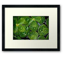 Untitled.00061 Framed Print
