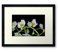 Untitled.00063 Framed Print