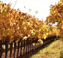 Fall in Sonoma Valley Sticker
