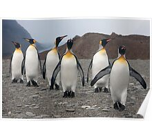 King Penguins on Parade Poster