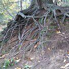 Pine Pointe #2 by amberzimmerman
