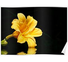 Yellow Lily Reflection Poster