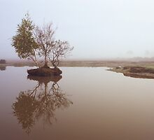 Bonsai Tree by Kasia Nowak