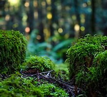 Moss fence with dancing light by smilinginsonoma