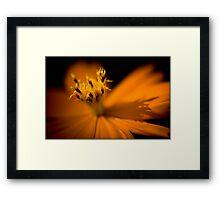 Untitled.00092 Framed Print