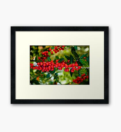 Untitled.00097 Framed Print