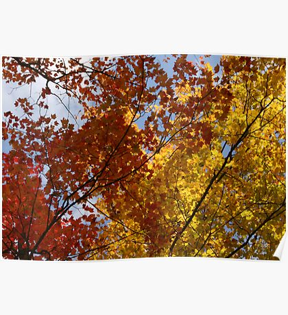 veines in autumn trees  Poster