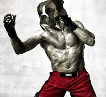 The boxer fighter by barruf