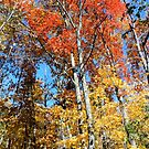 Orange and Yellow Fall Landscape - Nature Photography by Barberelli by Barberelli