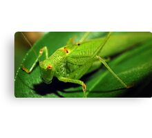 Locust macro shot Canvas Print