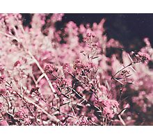 Pollination  Photographic Print