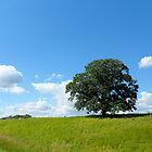 One Green Tree Landscape by Barberelli
