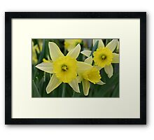 Spring flowers without showers Framed Print