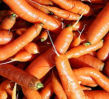 Carrots fresh from the garden. by Stephen Thomas