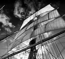Wind in the Sails by Barbara  Brown