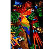 Parrot Paradise Photographic Print
