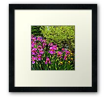 Border of Beauty Framed Print