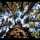 Trees by Devon Mallison