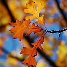 Oak Colors by kentuckyblueman