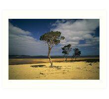 Broke Inlet Trees Art Print