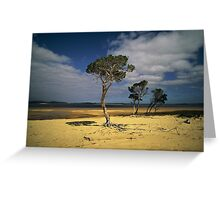Broke Inlet Trees Greeting Card
