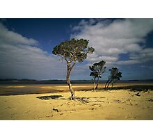 Broke Inlet Trees Photographic Print