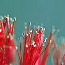 Bottle Brush by Beth A