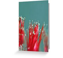 Bottle Brush Greeting Card
