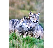 Wolves Photographic Print
