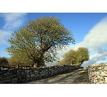 Scenic rural path Photographic Print