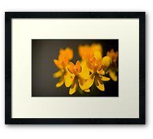 Untitled.00138 Framed Print