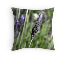 Lavender stalks Throw Pillow