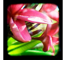 Frangipani Delight TtV Photographic Print