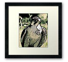 Falcon #2 Framed Print