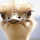 ostrich by IngridSonja