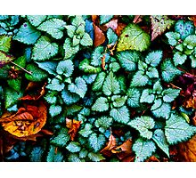 Dances With Leaves Photographic Print