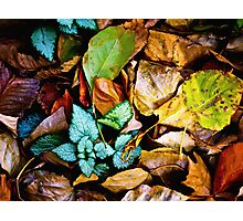 Autumn Blanket Photographic Print