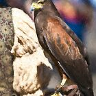 Stylized photo of a falcon sitting on leather gloved hand of falconer by NaturaLight