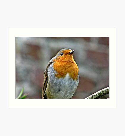 Robin in Song. Art Print