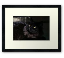 Perched Poe Framed Print