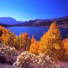 June Lake by steveberlin