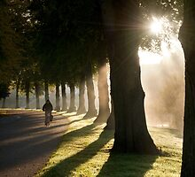 Sunbeams Avenue by Mike Ashton