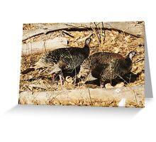 Wild turkeys in Zion Greeting Card