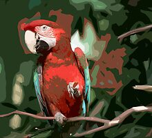 Stylized photo of a multi-colored Macaw parrot. by NaturaLight