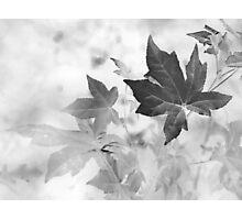 Simple Beauty Speaks Volumes Photographic Print