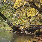 Bright Leaves Over Creek by clarecahalan