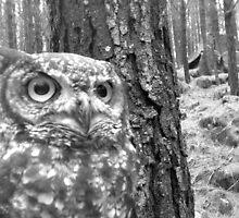 owl1 by FalcoPeregrinus