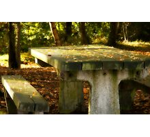 Woodland Bench Photographic Print